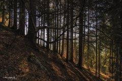 Natur170815WS.jpg